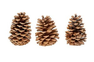 Turn ordinary pinecones into handmade craft items.