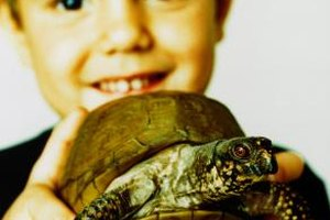 Sing odes to the turtle with songs designed for children.