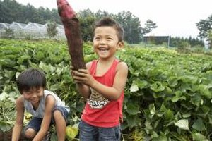 Visit a working farm to introduce your preschooler to how food is grown.