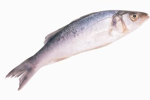 Sea bass can be cooked whole or cut into fillets.