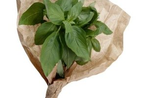 Natural oils in fresh basil contain most of the aroma and flavor.