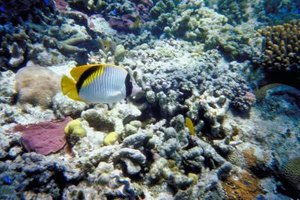 The coral reef is home to a diverse population of plants, fish and other sea creatures.