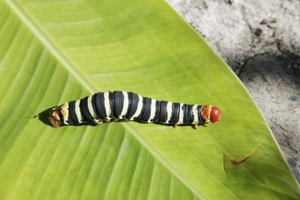 Children can watch a caterpillar turn into a beautiful butterfly.