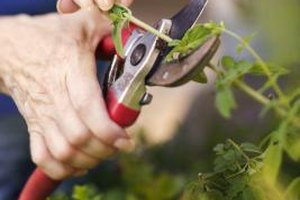 Splints make gardening and other tasks easier for people with rheumatoid arthritis.