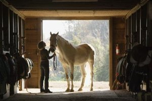 An equine nutritionist can set up a customized diet for your horse.
