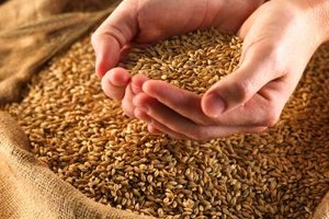 Whole grains generally store better than flour and ground grains.