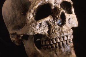 Top Colleges for Forensic Anthropologists