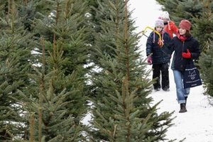 Christmas tree farms add to the holiday fun.