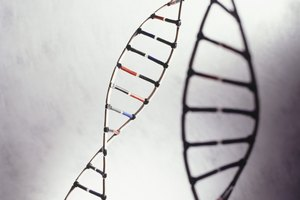 College Classes Required to Study Genetics