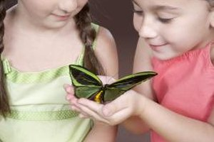 Young learners can discover the wonder of the insect world.