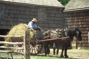 Amish Traditions & Coming of Age