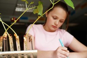 Grade school students can study the life-cycle of a plant.