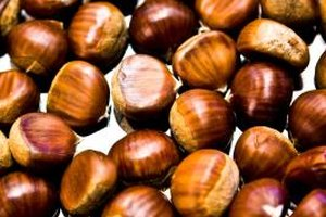 Healthy shelled chestnuts have a yellow color.