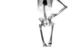 The skeletal system provides the framework for the body's shape.
