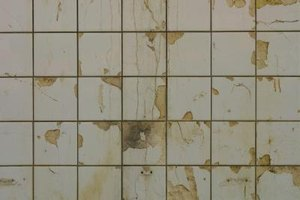 Mold poses a major health hazard to workers.