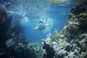 Snorkeling and scuba diving are popular activities at marine biology camps.