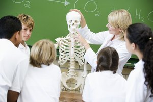 Classroom Activities Involving the Skeletal System