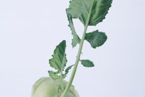 Cook frozen kohlrabi straight from the freezer.