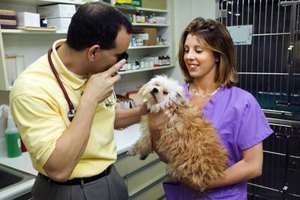 Veterinary assistants and veterinary techs often work together.