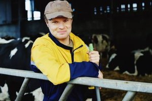Dairy farm owners' incomes are usually commensurate with the size of their farms.