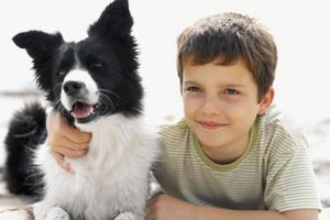 Companion dogs can offer many benefits to autistic children.