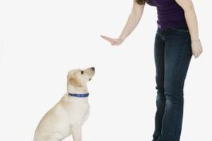 Modifying improper behavior patterns in domestic animals can improve their relationship with their owners.