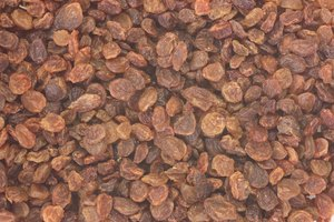 Are Raisins Safe for Toddlers?