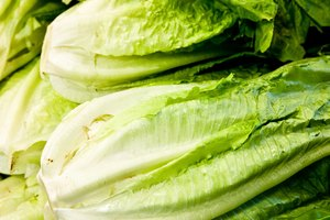 How to Store Romaine Lettuce and Kale