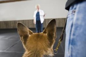 Training service dogs can be a rewarding career.