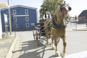 Take your Colonial kid for an old-fashioned horse and carriage ride.