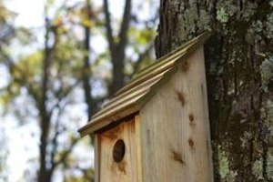 A simple birdhouse pattern is a suitable starter project for your teen.