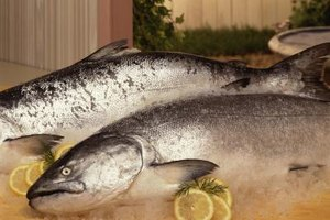 Whole salmon can be cooked frozen or thawed, whichever is more convenient.
