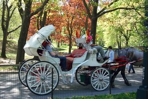 A horse and carriage ride is a classic romantic gesture.