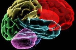 How Does the Human Brain Remember Things?