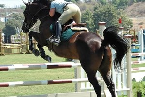 Equestrian Colleges in Wisconsin