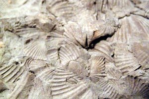Kindergarten Activities or Lessons on Fossils