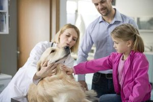 The Best Veterinary Schools in the World