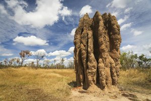 What Sounds Do Termites Make?