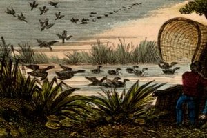 To attract ducks, a hunter must create a life-like sanctuary with decoys and hunting blinds.