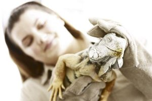 What Type of Classes Do You Need to Take to Get a Degree in Zoology?