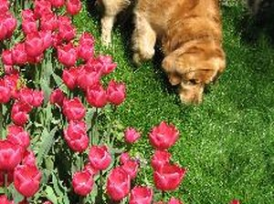 Plants That Make Dogs Sick