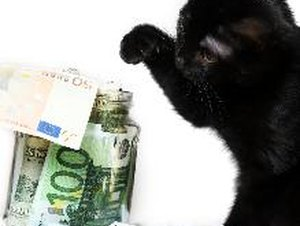 What Does it Cost Annually for a Cat?