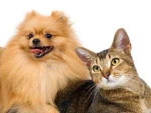 Diseases Passed Between Cats & Dogs