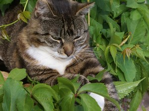 Herbs & Plants That Are Poisonous to Cats