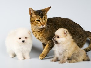 Tips on How to Train a Puppy & a Cat to Live Together