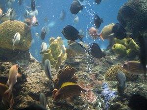 How Often Should You Change Aquarium Water? - Pets