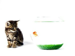 Keeping a Cat Out of the Top of the Fish Tank