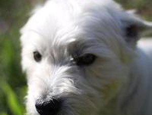 Canine Vaccines Required by Law - Pets