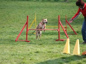 How to Keep Your Dog Focused During an Agility Competition