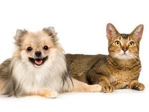 How to Select a Dog or Cat for a Pet